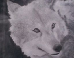 Wolf by Drerven