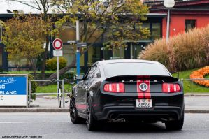 Shelby by Attila-Le-Ain