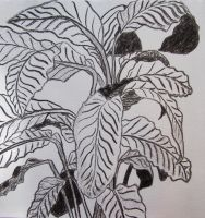 Charcoal Calathea by Lost-in-the-day