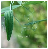 Curly Leaf by Emilie25