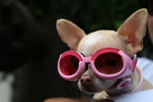 569ee28b909bc0 Rose-colored-glasses by SueJO