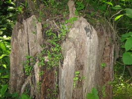 Tree Stump by Holly6669666