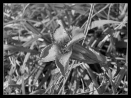 Black and white 1 by 99-in-the-shade