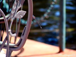 Dragonfly on a Chair by Gryffingirl77