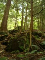 Roots rocks and trees by hmarieystock