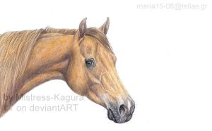 light chestnut standardbred by Mistress-Kagura