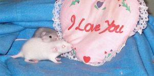 Love Rats by 6Dark6Haven6