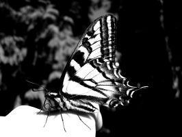 Swallowtail by XSomethingWickedX