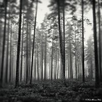 Silent Forest by NachoRomero