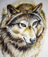 Wolf Tutorial Closeup 10 by HouseofChabrier