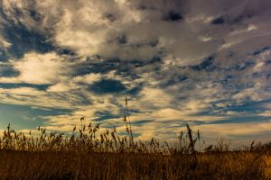 Grass in the Breeze by darrenchadwick1311