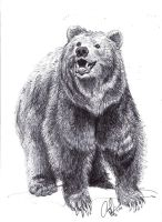 Grizzly Bear by Art-Minion-Andrew0