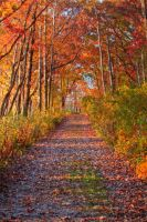 October Colors by jvrichardson