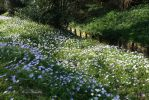 Spring Flowers at St Johns by BlastedFen
