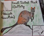 Brush-Tailed Rock Wallaby - Animal of June 15 by MoonyMina