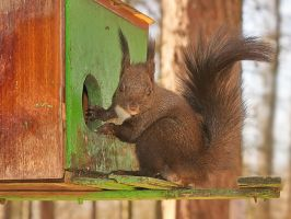 A little thief by starykocur