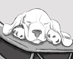 Sleeping Puppy by TheBabs