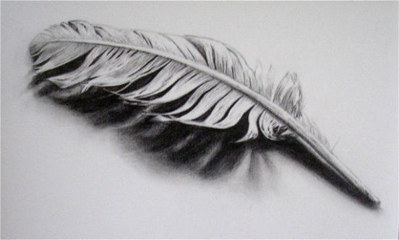 Feather by being-me
