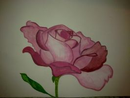 Pink rose by daliahme