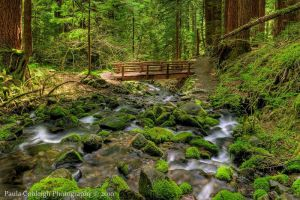 Olympic National Park by La-Vita-a-Bella