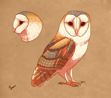 Barn owl by fancypigeon