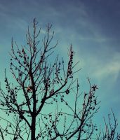 Branches by Humble-Novice