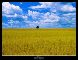 alone.... by orcunceyhan