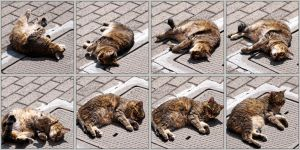 Cat Sequence by Estranged89