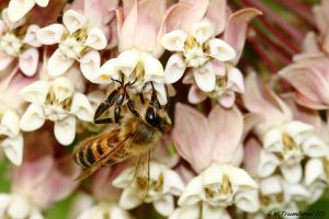 Just a ..Worker Bee by natureguy