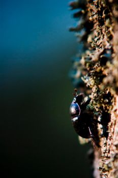 A bug on a tree by czaknoris