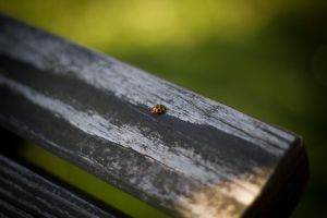 Ladybird by Puttee