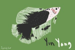 Betta Fish: YinYang by myexplodingcat
