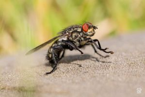 Cleaning fly by sylvaincollet