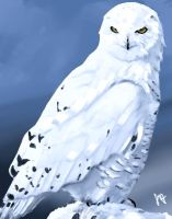 The White Owl by Sketchb00k