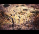 dead tree. by Altingfest
