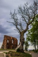 Old Tree and the ruins... Trzesacz - Poland by dominik-sekowski