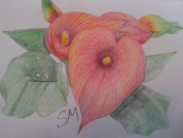 Cala Lilies drawing by stephtastic14