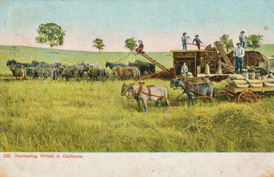 Vintage California - Sonora Wheat Farming by Yesterdays-Paper