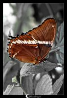 Butterfly in grey II by Mondkringel