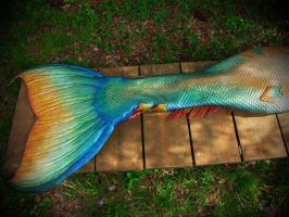 Up Close with a Tail by Merbellas by MerBellas