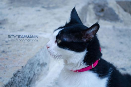 Juve the Black and White Cat by MaNkIbOwN