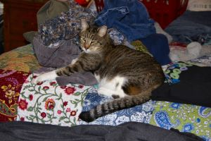 My Laundry Supervisor by Caloxort