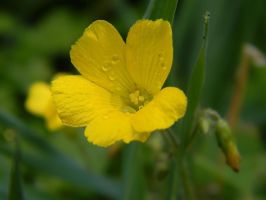 Yellow wet by robesauer