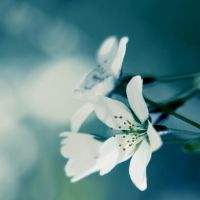 white flower by AdrianaKH-75
