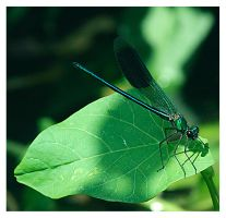 A Moment with a Damselfly by StrawBeth