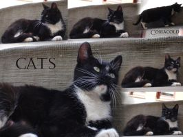 Cat pack by Comacold-stock