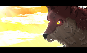 Sunset Wolf by KillerSandy