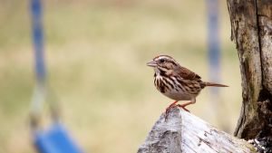 Sparrow by fractalfiend