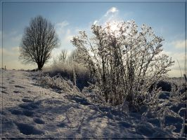 Winter... by Yancis