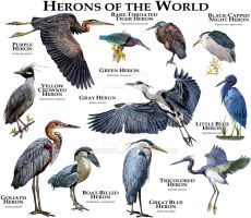 Herons of the World by rogerdhall